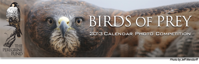 Birds of Prey 2013 Calendar Photo Competition